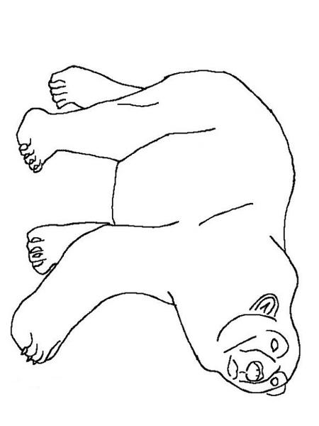 Urs Polar Educatie Copilulro
