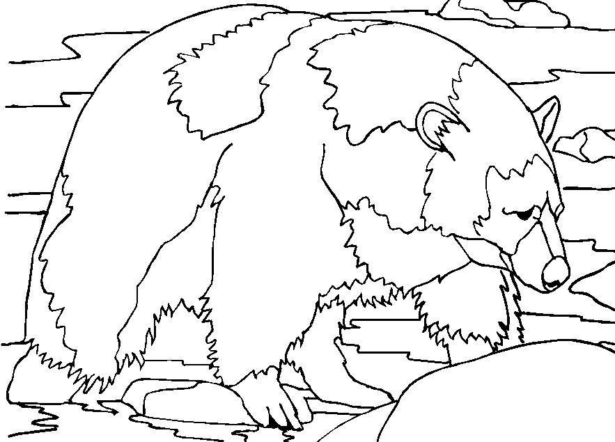 Fram Ursul Polar Educatie Copilulro