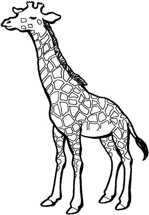 Girafa Educatie Copilulro
